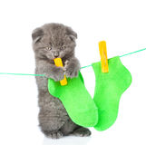 Kitten removes dried after washing underwear with rope. isolated on white Stock Images