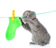 Kitten removes dried after washing underwear with rope. Stock Photography
