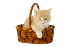 Kitten in resting Stock Image