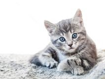 Cute grey tabby kitten with blue eyes looking into camera. Kitten resting indoors Royalty Free Stock Photos