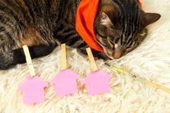 Kitten resting near three arrows up Stock Photos