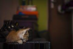 Kitten Resting Stock Photo