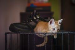 Kitten Resting Stock Images