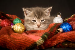Kitten resting on a red blanket Royalty Free Stock Photos