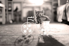 Kitten riding the bike stock image