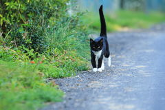 Kitten on road Royalty Free Stock Photography