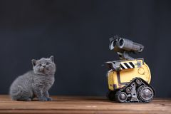 Kitten and a robot. British Shorthair kitten and Wall-e robot stock photo