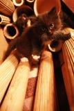 kitten rock climber stock photography
