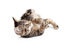 Kitten Rolling On Back To-Spel Royalty-vrije Stock Foto