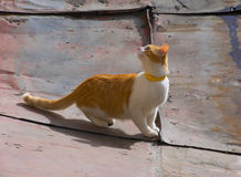 Kitten on a roof Stock Photography