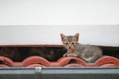 Kitten on the roof Stock Photography