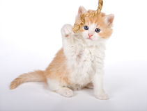 Kitten with rope Royalty Free Stock Image