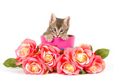 Kitten with roses Stock Images