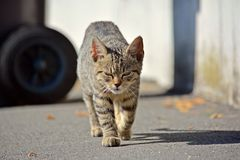 Kitten running the photographer Stock Photography