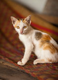 Kitten at rural house interior background in Vietnam. Kitten in traditional Vietnamese house at Mekong Delta in South Vietnam Royalty Free Stock Images