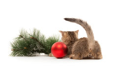 Kitten's back with new year decorations Royalty Free Stock Photos