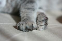 Kitten's paw Royalty Free Stock Photos