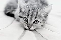 Kitten with sad eyes Stock Photography