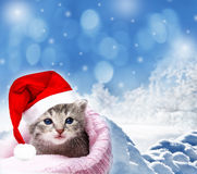 Kitten with santa cap Royalty Free Stock Image