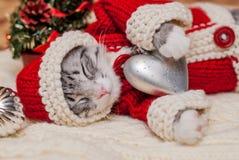 Kitten Santa Claus Fotografia de Stock