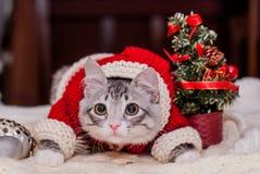 Kitten Santa Claus Fotografie Stock