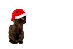 Kitten Santa Claus hat copyspace Stock Photography