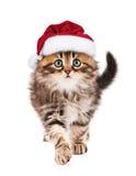 Kitten in Santa Claus hat Stock Images