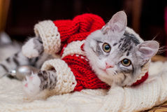 Kitten Santa Claus. The kitten in the suit Santa Claus sitting near the Christmas tree Royalty Free Stock Images