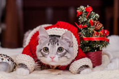 Kitten Santa Claus stock photos