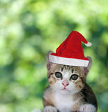Kitten in Santa Claus xmas red hat on green background. Stock Image
