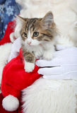Kitten with santa claus Royalty Free Stock Photos
