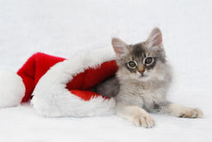 Kitten in a santa hat Stock Photos