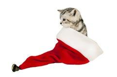 Kitten in a santa hat. Stock Photos
