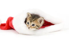 Kitten in a santa hat Stock Photography