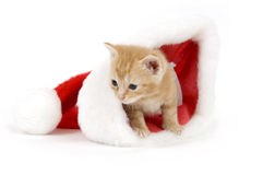 Kitten in a santa hat Stock Photography