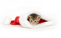 Kitten in a santa hat Royalty Free Stock Photography