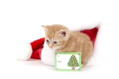 Kitten and santa hat with card Stock Photos