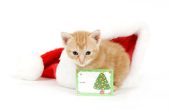 Kitten and santa hat with card Royalty Free Stock Photo