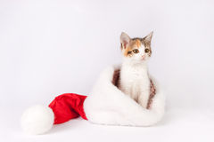 Kitten in a santa hat. Stock Photography