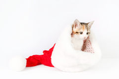 Kitten in a santa hat. Royalty Free Stock Photos
