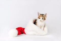 Kitten in a santa hat. Royalty Free Stock Image