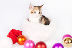 Kitten in a Santa hat and Christmas balls. Stock Photography