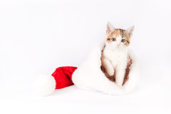Kitten in a santa hat. Royalty Free Stock Images