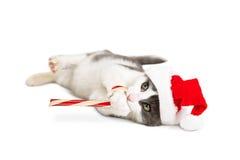 Kitten Santa Holding Candy Cane Royalty-vrije Stock Afbeelding