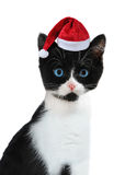 Kitten with Santa's cap Royalty Free Stock Photo