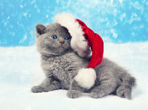Kitten in Santa's hat Royalty Free Stock Photos