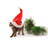 Kitten with Santa's hat on white Stock Image