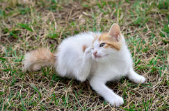 Kitten scratching fleas. Kitten lying down on the grass and scratching fleas stock photo