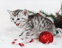 The kitten screams meow. Kitten and Christmas Stock Photo