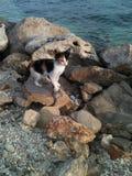 Kitten by the seashore. Beach on Korcula island, Croatia Royalty Free Stock Photos